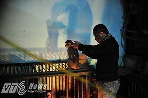 Những ngày này, Hà Nội đang rất lạnh. Khu vực nuôi dưỡng huấn luyện khỉ của Rạp xiếc Trung ương luôn sáng ấm những bóng đèn sưởi. Nghệ sỹ Nguyễn Chí Quang (55 tuổi, 35 năm gắn bó với nghề xiếc khỉ) đang chăm sóc chú khỉ Ka -