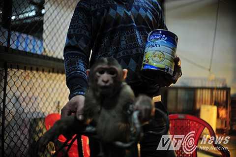 Với những nghệ sỹ xiếc khỉ, nỗi buồn lớn nhất là khi