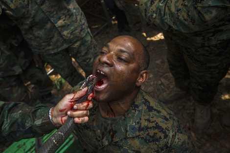 Lính thủy đánh bộ Mỹ uống máu rắn hổ mang để sinh tồn trong rừng, một bài tập trong cuộc tập trận Hổ mang vàng ở Thái Lan