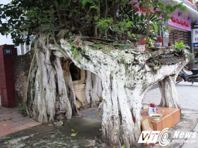 Các rễ cây đan với nhau với bốn chân cắm xuống đất tạo thành ngôi miếu