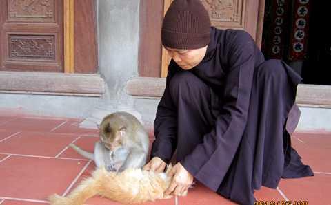Khỉ chơi cùng mèo ở chùa Nhẫm Dương