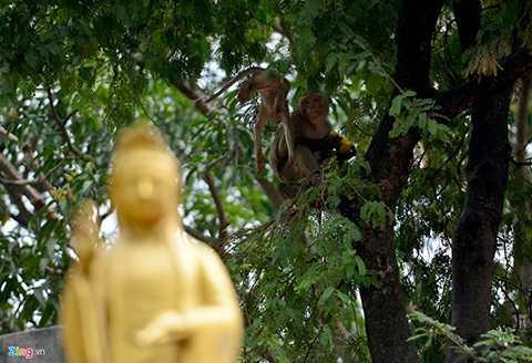 Theo những người bán hàng có thâm niên ở chùa, ban đầu từ một cặp khỉ do một người dân đem tới chùa phóng sinh, trải qua thời gian sinh sôi nảy nở, đến nay có tới 30 con.