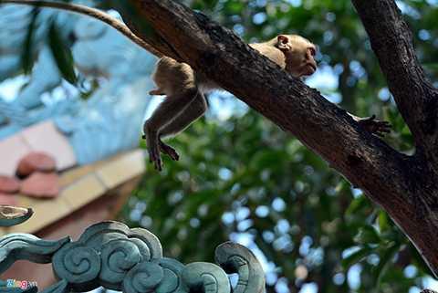Các thế hệ khỉ vui nhộn, chuyền cành giữa cảnh sắc thiên nhiên hữu tình.