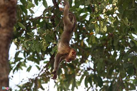 Nghịch ngợm nhất là những chú khỉ con.