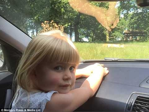 Đôi khỉ trong công viên say đắm nhau ngay trên capô xe chở bé Gracie Hennessy