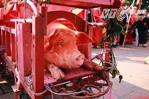 Cứ vào ngày mùng 6 Tết hàng năm, hàng nghìn người dân các khu vực lân cận lại nườm nượp đổ về làng Ném Thượng (Bắc Ninh) để tham dự và chứng kiến cảnh chém lợn hiến tế, sau đó lấy tiền quết máu heo với hy vọng mang đến nhiều may mắn trong năm mới