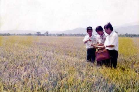 Ông Nguyễn Bá Thanh (ngoài cùng bên phải) đi kiểm tra ruộng lúa.