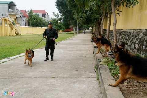 Các chú chó khuyển cảnh trong một buổi tập luyện.