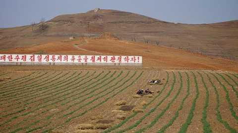 Cánh đồng điển hình ở Triều Tiên.