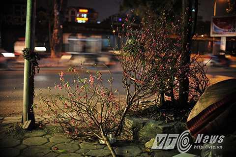 Những 'bãi rác đào' khổng lồ xuất hiện trên nhiều tuyến phố ở Hà Nội sau Tết.