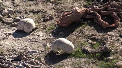 Hình ảnh một ngôi mộ tập thể từng được phát hiện ở Syria. Ảnh: AP