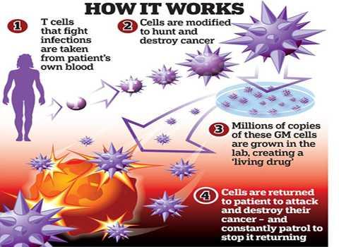 Các bước tiến hành liệu pháp T-Cell. Ảnh Daily Mail
