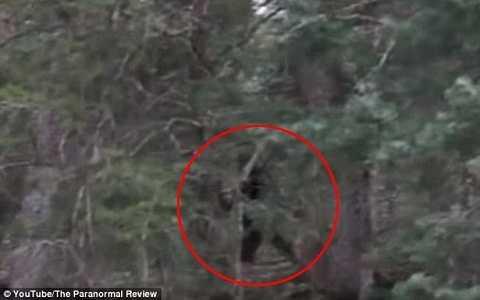 Có hay không quái vật Bigfoot bí ẩn trong truyền thuyết?