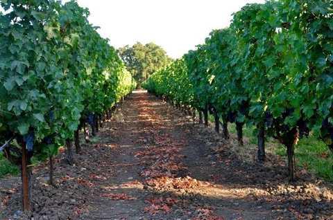 Thung lũng Napa, là vùng làm   vang chất lượng hàng đầu thế giới được giới chuyên gia công nhận từ năm   1976 khi chai vang Napa Valley chiến thắng vang Pháp, giành được giải   quán quân trong cuộc thi Paris Wine Tasting.