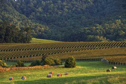 Được mệnh danh là quê hương rượu vang ở   Mỹ, nơi đây có nhiều hầm rượu vang nằm rải rác dọc theo khu nhà nghỉ,   khách sạn, đường mòn đi bộ và vườn cây ăn trái.