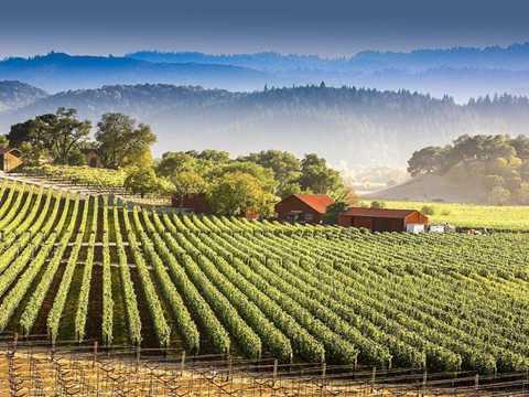 Diện tích trồng nho tại đây chỉ bằng   1/8 so với vùng Bordeaux Pháp và hàng năm chỉ sản xuất ra 4% sản lượng   rượu so với toàn vùng California. Tuy nhiên, đến 80% sản lượng lại được   tiêu thụ ngay trong nội địa Mỹ. Vì vậy, sản phẩm Napa Valley trên thị   trường rượu thế giới không nhiều.