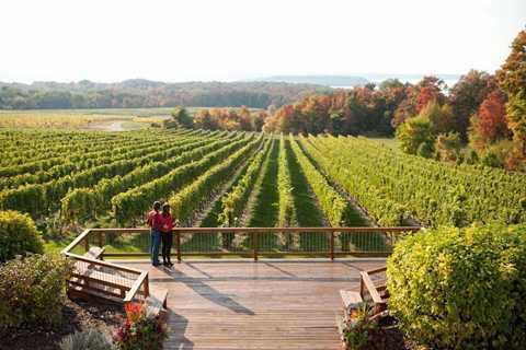 Thung lũng nho tại thành phố Traverse, Michigan (Mỹ), xếp hạng thứ 13 trong các khu sản xuất rượu vang thượng hạng của Mỹ.