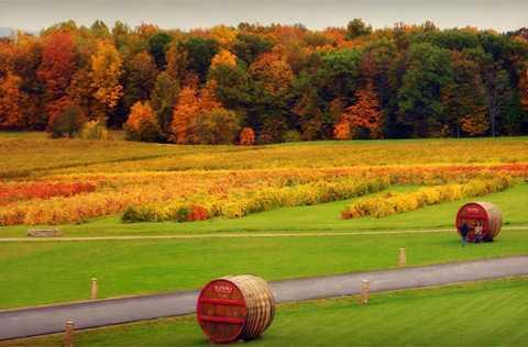 Finger Lakes được TripAdvisor bầu   chọn là một trong những xứ sở rượu vang hàng đầu tại Mỹ và được những   tín đồ rượu vang ngưỡng mộ và yêu mến.