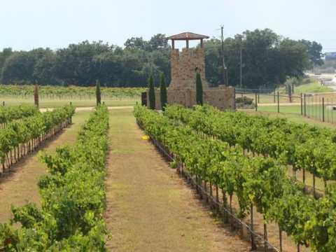 Vườn nho Lone Star ở Texas Hill Country là khu vực sản xuất rượu vang lớn thứ 5 ở Mỹ.