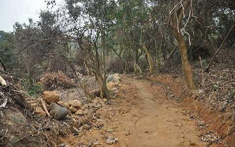 Một đoạn đường dẫn vào khu lán trại xây dựng trái phép tại tiểu khu 62 rừng Sơn Trà