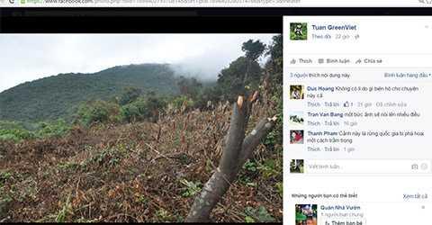 Một góc rừng Sơn Trà bị chặt hạ không thương tiếc