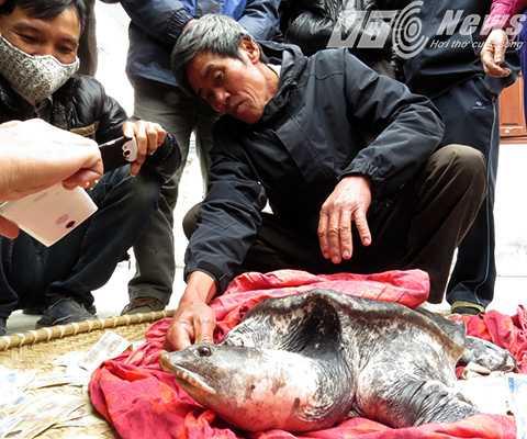 Ông   Tý vẫn đang chăm sóc, với mong muốn sẽ không bán thịt mà nhượng lại cho   tổ chức, cá nhân để nuôi, chăm sóc, bảo tồn tại các ao, hồ của đình,   chùa...