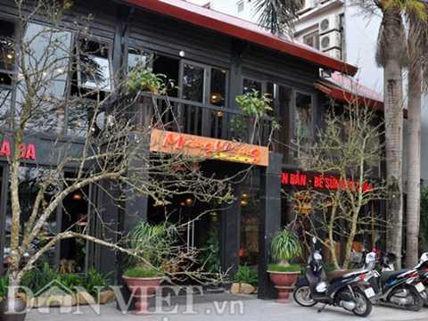 Hai cành lê rừng cổ thụ được một chủ nhà hàng trên đường Lạc Long Quân cắm trang trí trước của để lấy may đầu năm.