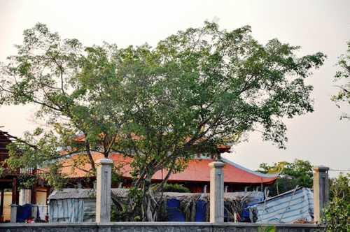 Từ lúc chính quyền địa phương yêu cầu tạm dừng công trình, cổng nhà thờ tổ luôn đóng kín và được che bạt.