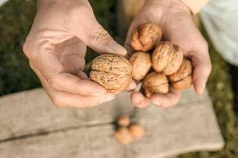 Ăn quả hạch giúp sống thọ - Ảnh: Shutterstock