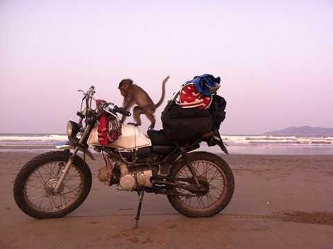 Chú khỉ này chính là lý do khiến Quốc Toản quyết định về quê ăn Tết bằng xe máy.
