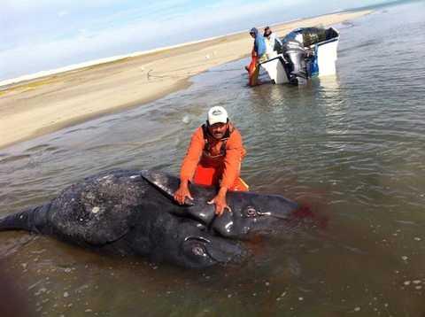 Tuy đã chết nhưng con thủy quái đại dương này vẫn khiến nhiều người sửng sốt, khiếp sợ bởi ngoại hình độc nhất vô nhị của nó.
