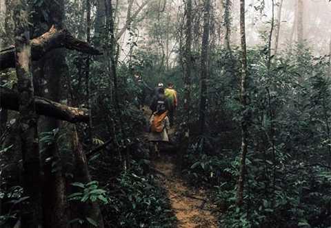 Đoàn công tác kiểm tra rừng tại bản Đoòng.