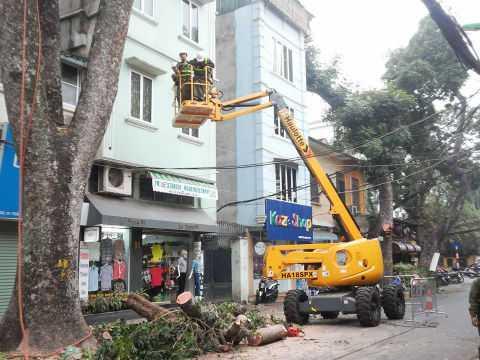 Xe chuyên dụng phục vụ cắt tỉa cây xanh.