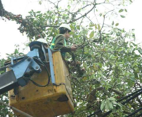 Công nhân đang cắt tỉa cây.