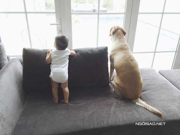 Trong một số tấm hình được Hà Tăng khoe với bạn bè, 'hoàng tử bé' 11 tháng tuổi đã đứng vững vàng. Cậu nhóc có sự gắn kết khá thân thiết với chú cún cưng tên Molly.