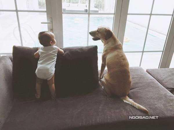 Chú cún được nàng ngọc nữ nuôi từ lúc kết hôn và coi như một người bạn.