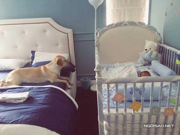 Lúc con trai Hà Tăng ngủ say sưa trong nôi, cún cưng nằm canh chừng bên cạnh.