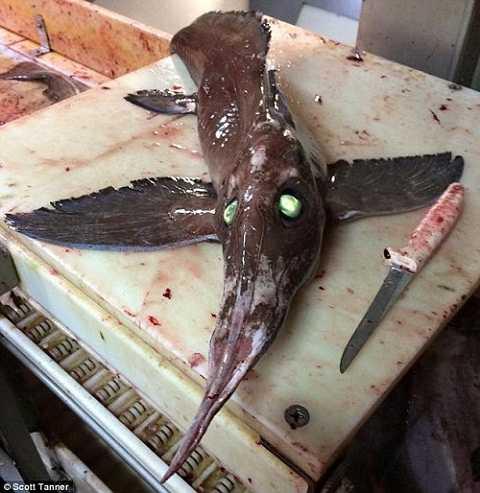 Loài cá có hình thù kỳ dị
