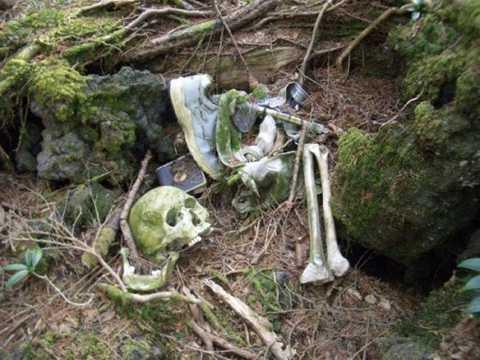 Khu rừng tự sát Aokigahara ở Nhật Bản khiến nhiều người ám ảnh khi đây là địa điểm tự tử phổ biến thứ 2 trên thế giới. Theo ước tính, từ thập niên 50, hơn 500 người đã đến đây tự kết liễu cuộc sống của bản thân. Nhiều lời đồn về việc các hồn ma, quỷ dữ ở Aokigahara lan truyền suốt nhiều năm qua khiến không ít người lạnh sống lưng.