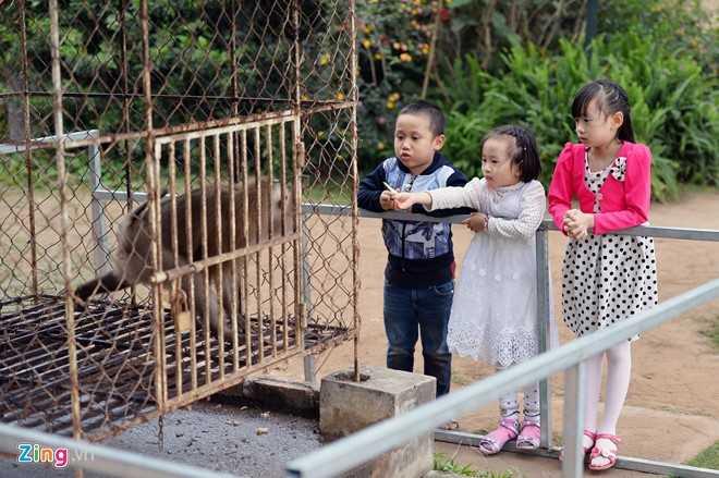 Một vài chú khỉ tượng trưng cho vườn bách thú, thu hút sự chú ý của trẻ em.