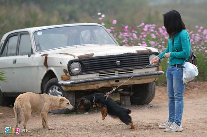 Những người sống quanh vùng có thể đưa thú cưng đến cùng dạo chơi.