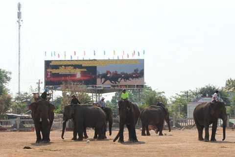 Các chú voi đượcnhững mơ-gáttập đá bóng chuẩn bị tại lễ hội