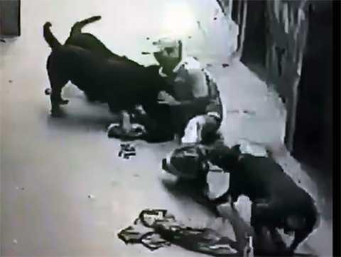 Anh Duy đang bị chó tấn công.