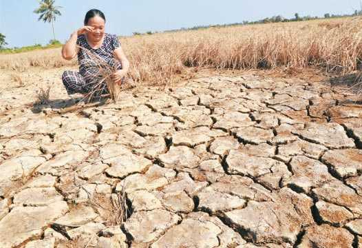 Hạn hán ở một số khu vực Đồng bằng sông Cửu Long - Ảnh: Vietnamnet