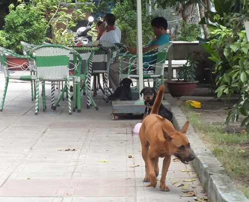 Chó thả rông không được rọ mõm - Ảnh: Thanh Niên