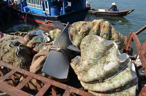 Sò tai tượng hay sò tượng là loài thân mềm