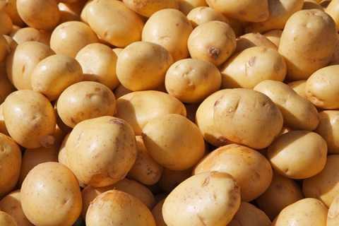 Khoai tây sẽ trở nên ướt, bở và chảy nước khi bỏ vào ngăn đá tủ lạnh