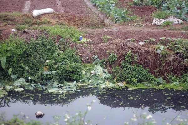Dòng nước hôi thối, bẩn hơn cả sông Tô Lịch được người dân rửa rau, ném vung vãi lên bờ.