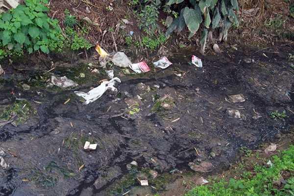 Không thể nghĩ rằng, rãnh nước đầy phân thế này vẫn có thể rửa sạch rau.