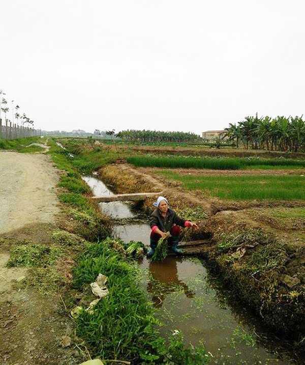 Người phụ nữ rửa rau ở rãnh nước chết. Nguồn nước dùng để tưới tiêu cho cây cối nhưng sau đó được sử dụng lại để rửa rau.